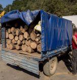Арестуваха шеф на регионална агенция по горите, водил група за незаконна сеч (снимки)